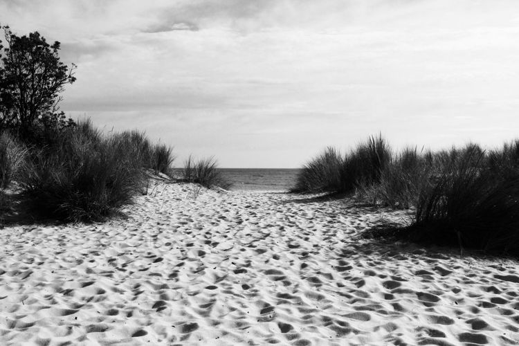 Sand Outdoors Sand Dune The Way Forward Day Nature Landscape Beach Cloud - Sky No People Tire Track Track - Imprint Scenics Tree Sky