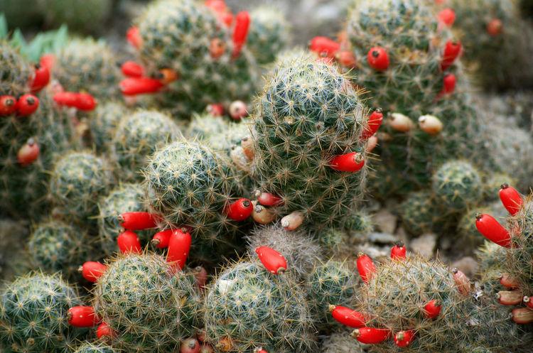 Beauty In Nature Brasil ♥ Cactus Close-up Day Freshness Growth Jardim Botânico Rj Nature Nikon D5100  Outdoors Plant Red Rio De Janeiro Rio De Janeiro Botanic Garden
