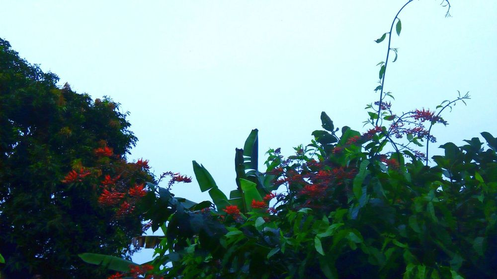 Growth Nature Tree Plant Low Angle View Flower Sky No People Outdoors Day Beauty In Nature
