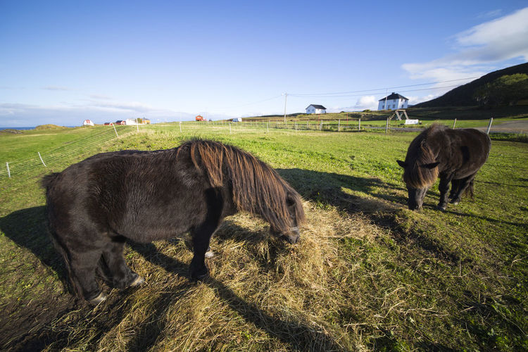 A series of photos from camping in Lofoten, Norway. Field Grassy Horse Lofoten Nature Norway Pasture Sky