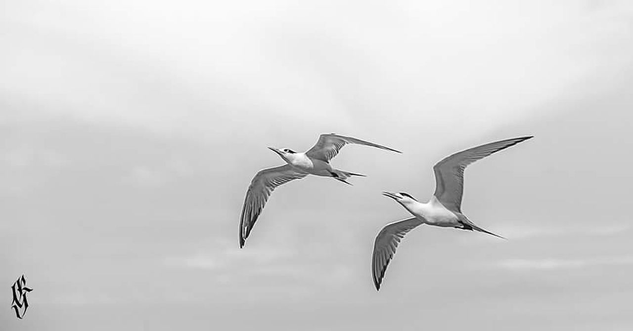 LOW ANGLE VIEW OF SEAGULLS FLYING OVER SKY