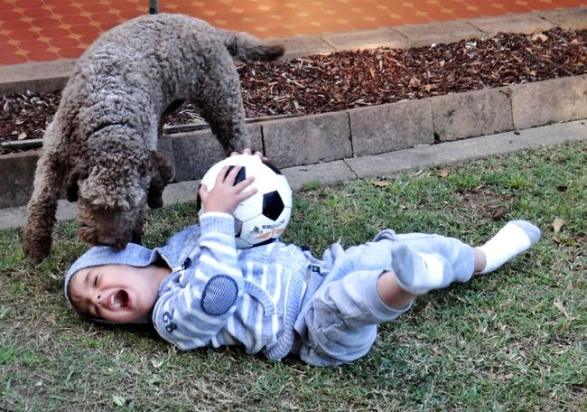 Boy Child Playing with his Pet Dog and a Soccerball Ball Natural Light Portrait Lagotto Romagnolo Pets Dogs Kid Family Kids Youth Childhood Children Portrait Canine Friendship Friends The Portraitist - 2016 EyeEm Awards Boys Children Playing LaGottoRomagnolo Pet Portraits