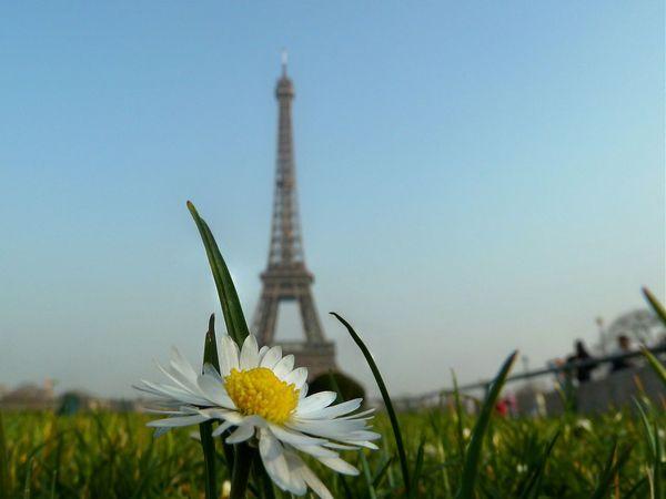 Paris Tour Eiffel Flowers Daisy