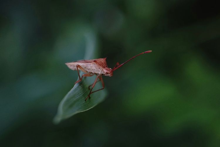 🍃🌿☘ I love macro. Macro Zoom Animal Green Macro Leaf Insect Red Close-up Animal Themes Green Color Fly