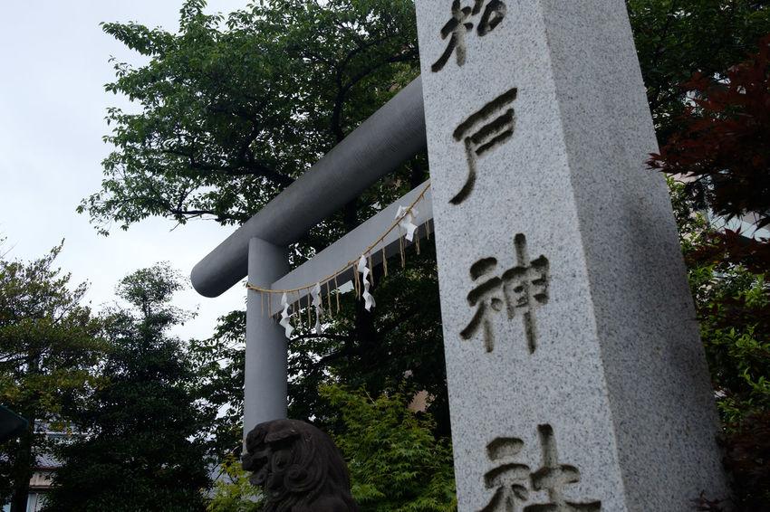 FUJIFILM X-T2 Shrine Shrine Of Japan Fujifilm Fujifilm_xseries No People Outdoors X-t2 松戸 松戸神社 神社