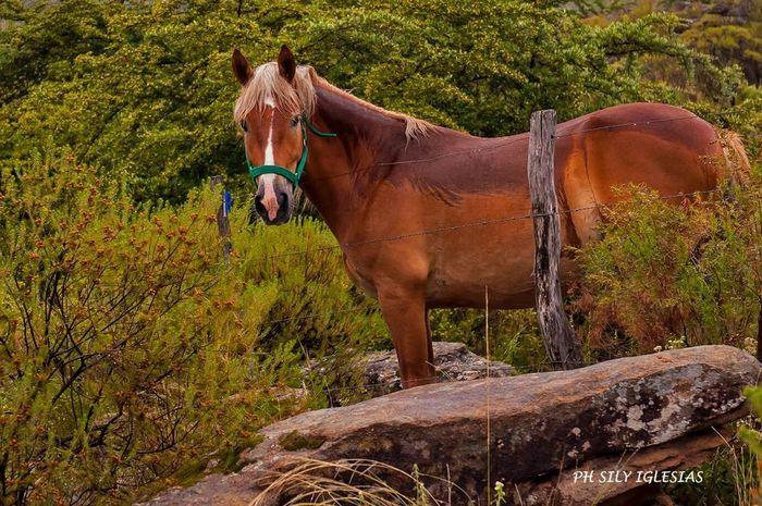 First Eyeem Photo Nature Travelling Horse Horses Cordobaargentina Tanti