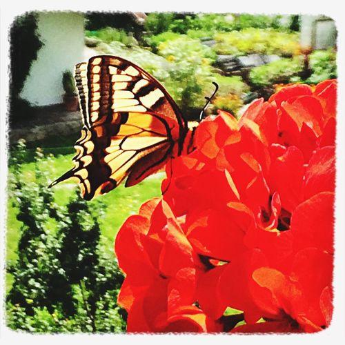 Beautiful Animals  Flower Taking Photos Sun ?☀️