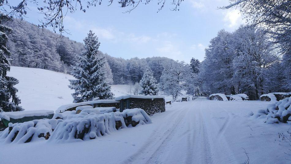 Cold Temperature Snow Winter Landscape Outdoors Idyllic Scenery Allgäu Alps 3XSPUnity Frozen
