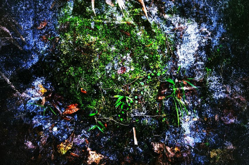 Forest Nature Moss Leaves Landscape Getting In Touch Taking Photos Check This Out