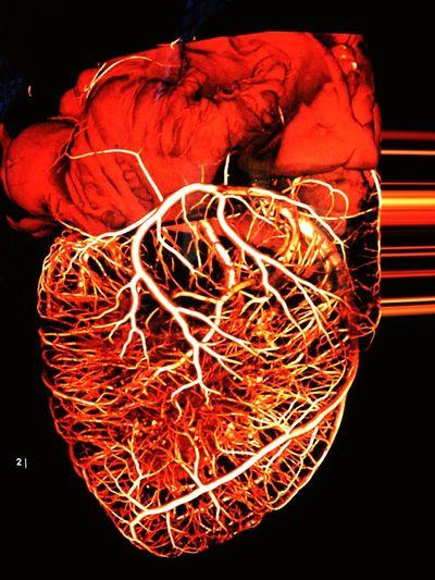 Recordar: Volver a pasar por el corazón... Belleza Red Heart Kokoro Photo Nature Corazón Latidos BEATS Dokidoki Vida
