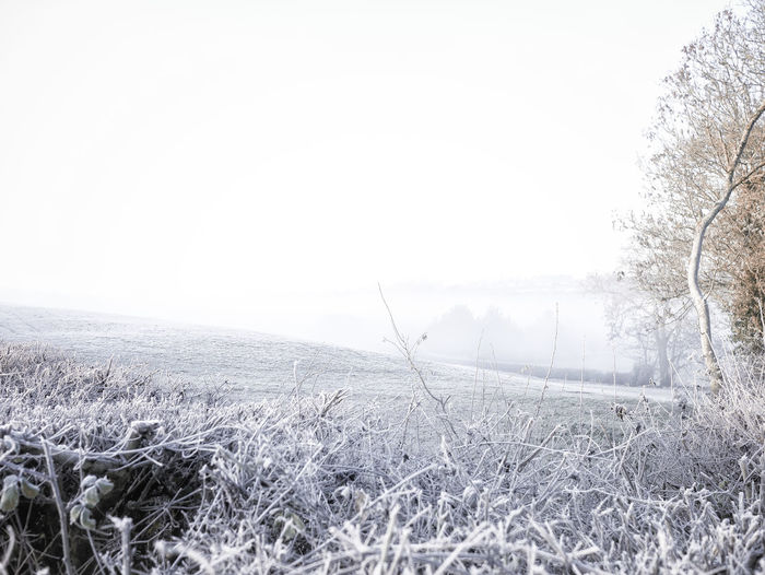 Beauty In Nature Field Focus On Foreground Frost Ice Landscape Nature No People Outdoors Scenics Tranquil Scene Tranquility Winter Panasonicgx7