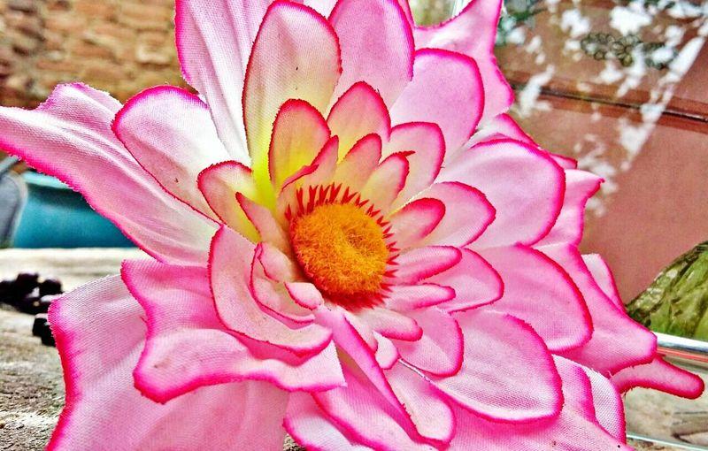 Flores para o dia