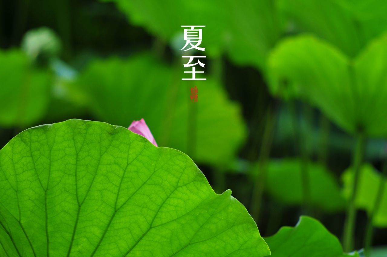 green color, leaf, growth, plant, day, no people, nature, close-up, focus on foreground, outdoors, beauty in nature, fragility, freshness