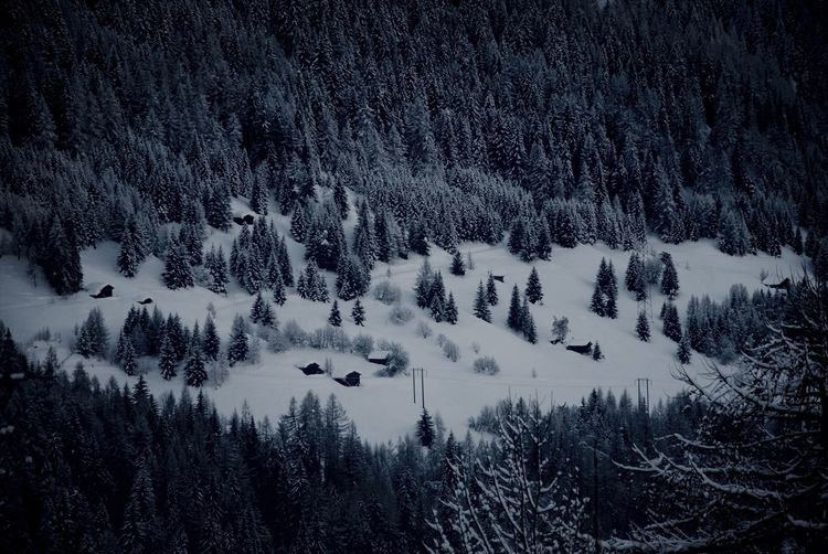Scenic view of snow covered forest
