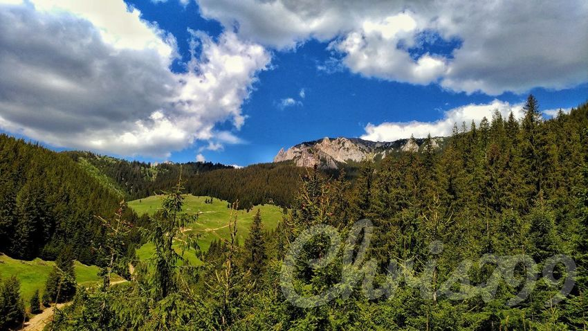 Cloud - Sky Sky Nature No People Landscape Beauty In Nature Outdoors Day Mountain Growth Tree Scenics Forest White Clouds Pasture Landscape Grass Green Color Tree Blue Sky Mountain View Romania Hasmasu Mare