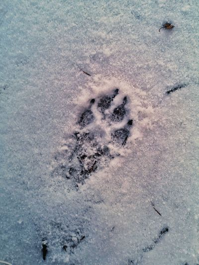 High angle view of footprints in snow