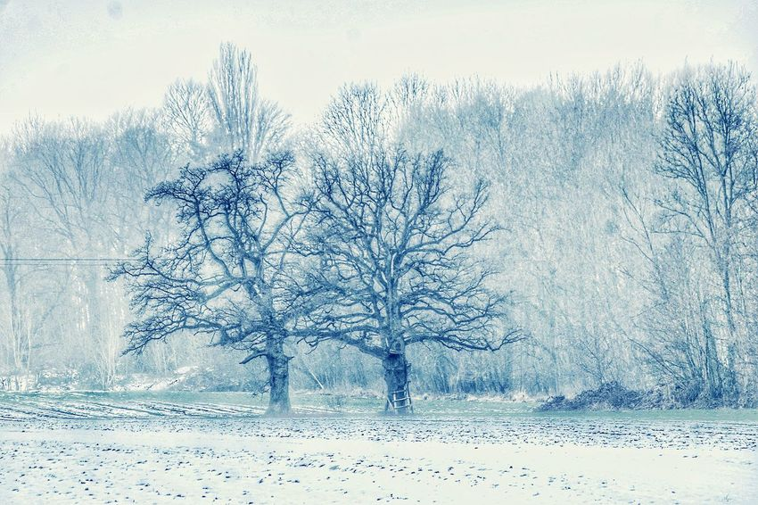 Cold Temperature Tree Bare Tree No People Snow Frozen Nature Snowing Technology Close-up Outdoors Sky Day Landscape Fog Foggy Day Beauty In Nature Nature On Your Doorstep EyeEm Nature Collection Nature Frosted Nature EyeEm Nature Lover Uniqueness