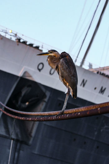 Heron perching on cables against ship