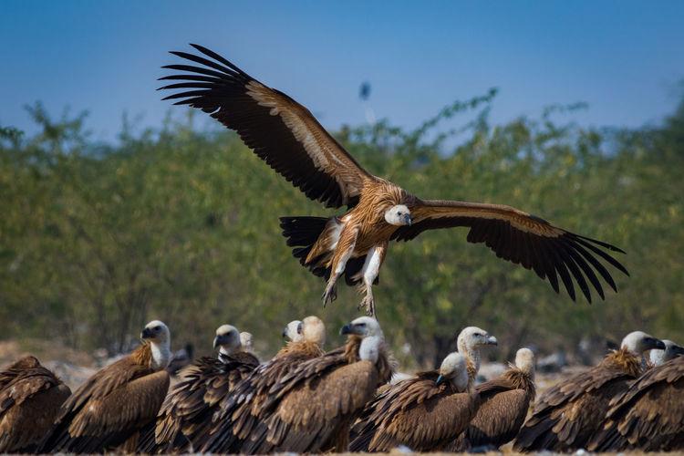 Flock of birds flying against the sky