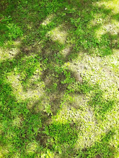 Klee Grass Green Outside Shadow Full Frame High Angle View Green Grassland Plastic Environment - LIMEX IMAGINE The Great Outdoors - 2018 EyeEm Awards EyeEmNewHere