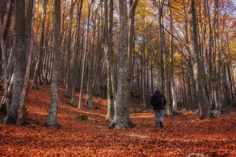 Rear view of man standing by trees in forest during autumn