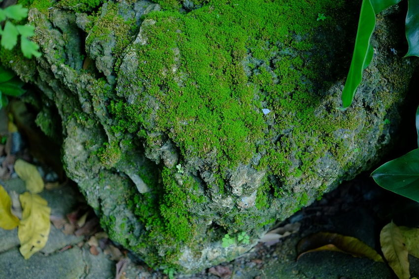 Moss Plant Moss Plant Green Color Nature Outdoors Leaf Plant Part Growth Moss