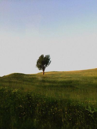Tree Alone Green Grass Tom Waits Green Grass Tom Waits