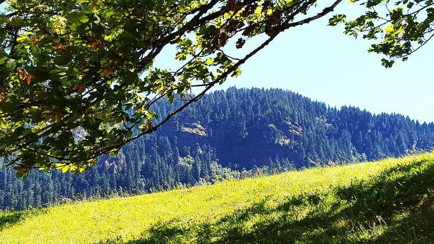 Bonneville Dam Oregon