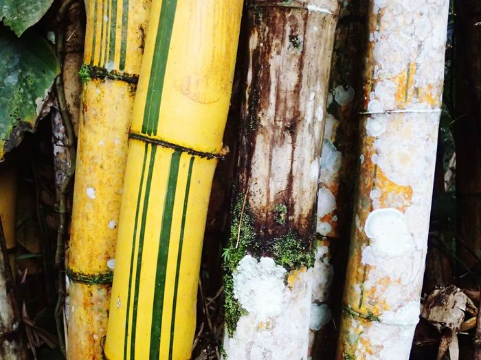 EyeEm Selects Yellow Day No People Close-up Outdoors Nature Bamboo Forest Bamboo - Plant Travel Interesting Detail Guatemala 🇬🇹 Shapes In Nature  Pattern Of Nature Wanderlust Beauty In Nature Details In Close Up Interesting Nature Green Stems Are Pretty Too