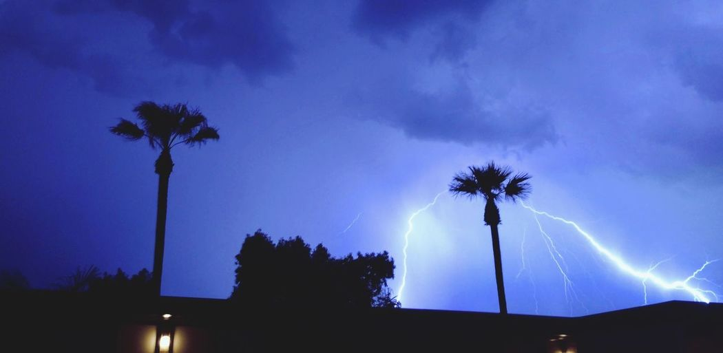 Palm tree is electric Lightning Stormy Weather Silhouette Plant Cloud - Sky Low Angle View Nature Palm Tree Illuminated Storm Power In Nature Night