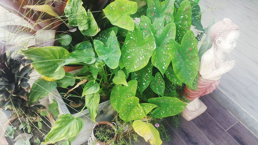 Ornamental plant Cold Temperature Ivy Potted Plant Field Garden Decorate Spread Wings Stretching Popular Photos Beautiful Soil Stucco Courtesy Lifestyles Travel Family Picture Beauty Nature Look Happiness Photography Beauty In Nature People Pictures Photo Leaf Close-up Green Color Plant Autumn Mood EyeEmNewHere