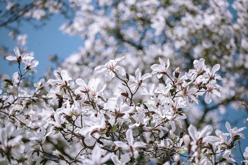©️865 magnolia.