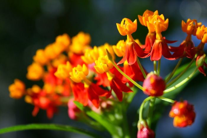 Flower Collection Bokeh Colorful Good Morning Petal Wintergarden EyeEm Nature Lover Flowers Flowerporn EyeEm Flower