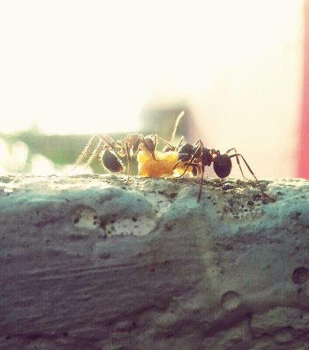 Ants Amazing Adapted To The City Nature