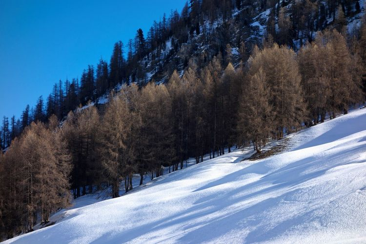 Snow Cold Temperature Winter Tree Scenics - Nature Nature Beauty In Nature Mountain Tranquil Scene Tranquility White Color No People Sky Non-urban Scene Forest Environment Frozen Pine Tree Coniferous Tree Evergreen Tree Pine Woodland