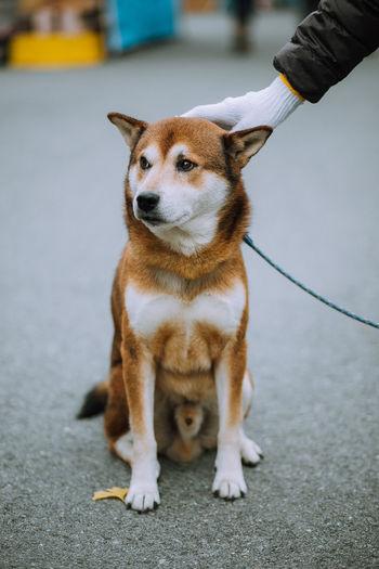 Animal Cute Dog Lover Loyal Pet Pets Portrait Sitting