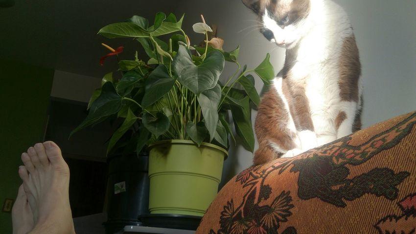 Relaxing My House Cute Pets My Cat! Cat