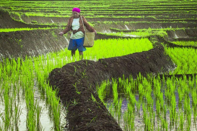 farmer in the