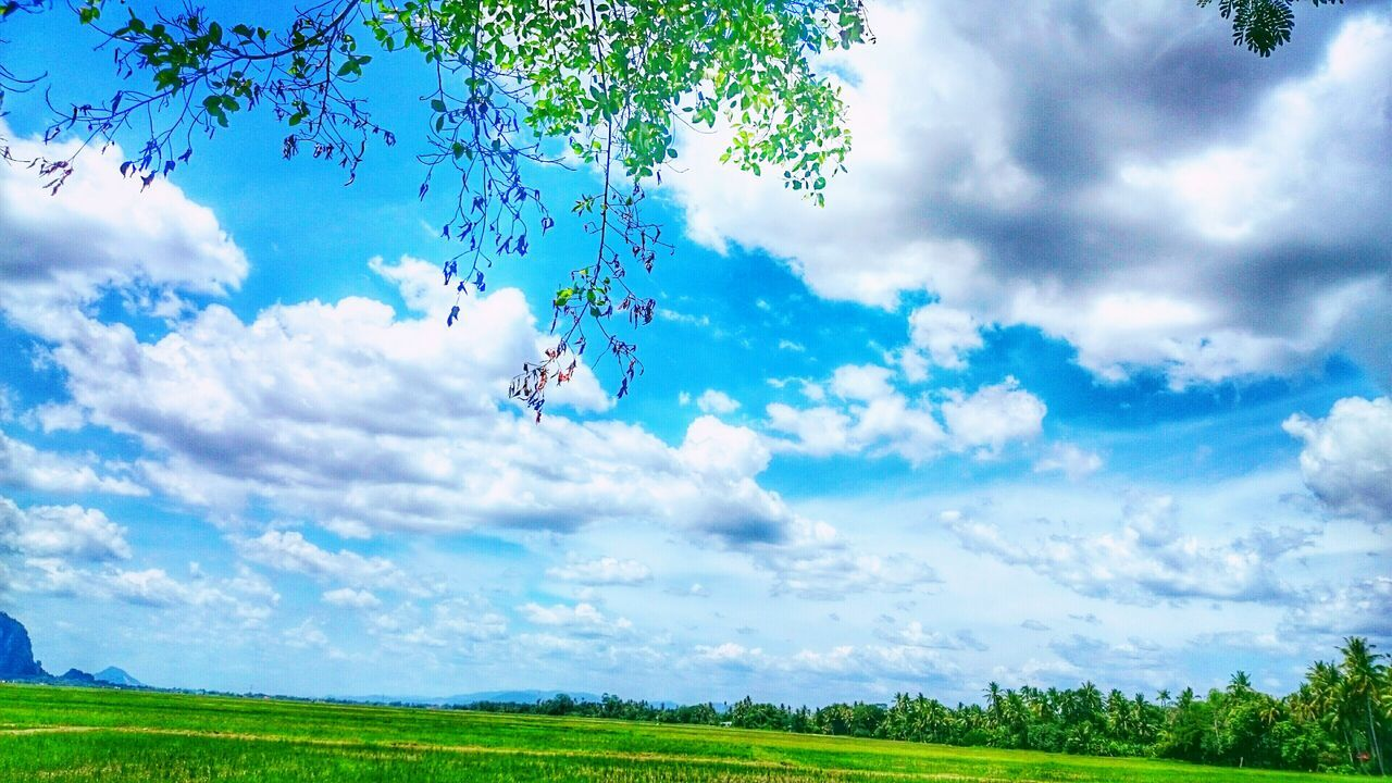 sky, nature, mid-air, cloud - sky, flying, kite, field, beauty in nature, day, tree, scenics, outdoors, tranquil scene, landscape, grass, fun, parachute, adventure, tranquility, kite - toy, growth, real people, bird, paragliding
