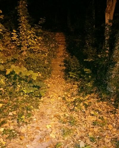 Nature Outdoors Beauty In Nature Stairway Stairwaytonowhere Dark Darkness Nighttime Earlymorning  Earlymorningphotography Earlymorningwalk
