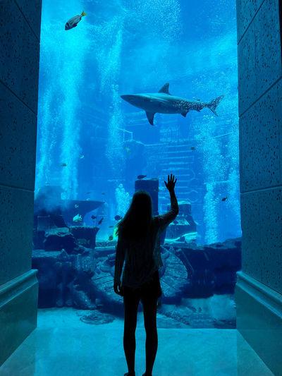 Full length rear view of fish swimming in aquarium
