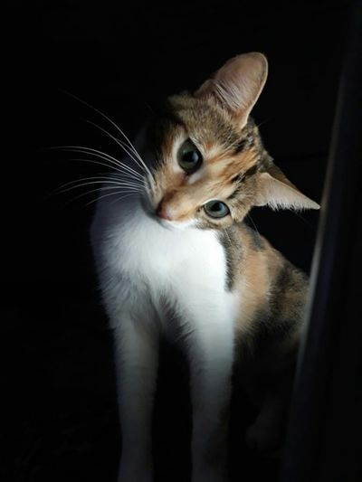 Portrait of cat against black background