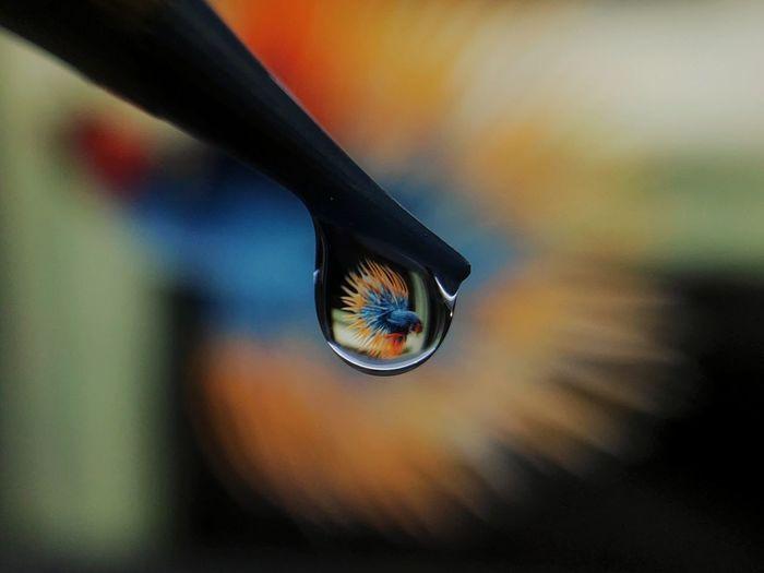 Macro shot of water drop on metal