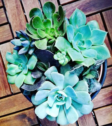 Amor Lisboa Portugal Succulentselfie Succulents SucculentsLover Succulove Life Succulentlife Succulentlove Art Happiness Greenismyfavoritecolor Colors Green Texture Photography Naturephotography Nature Plants Beautiful Beautifulnature Gardening Photooftheday