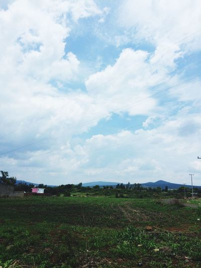 Field Sky Cloud - Sky Landscape Nature Day No People Growth Agriculture Grass Outdoors Beauty In Nature Scenics