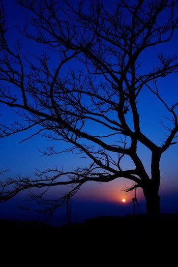 5年前 の3.11 、夕空を見る事が出来なかった方々へ… https://youtu.be/-g80uvoL4kw Sunset Sunset_collection Hagging A Tree Silhouette Love_blue Blue Sky Beautiful Sky 鉄塔 ♡Love 鉄塔♡Love EyeEm Nature Lover 夕暮れふぇち Landscape EyeEm Best Shots Darkness And Light From My Point Of View 遅ればせながら、 手のひらを太陽に かざせなくてすいません🙇 同じ空の下 from Kagoshima