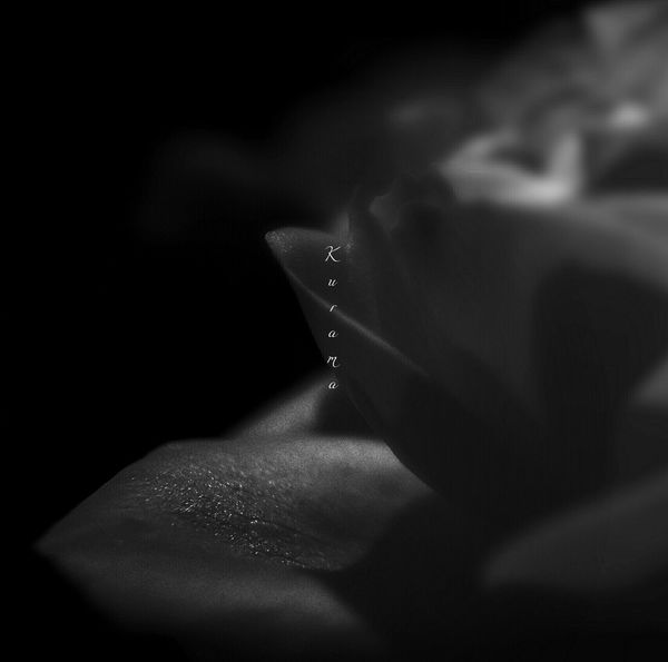 Blackandwhite Nightphotography No People Monochrome Japanesephotography Flower Nature Bright Light And Shadow Rose - Flower Water Shadow Close-up Drop Water Drop Wet