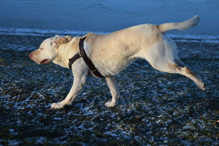 Dog One Animal Animal Themes Outdoors Dog Of The Day Dogs Of EyeEm Dogs Of Winter Dogwalk Petscorner Dogslife January 2017 Winter 2017 Take A Walk At The Lake Iced Water Blue Frozen Lake Water Beach Frozen Ground Bokeh Animals In The Wild Dogwalk Dogs Of Winter