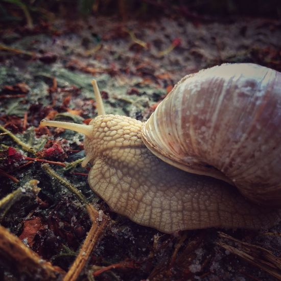 Animal Photography EyeEm Nature Lover Hello World Nature_collection Snail