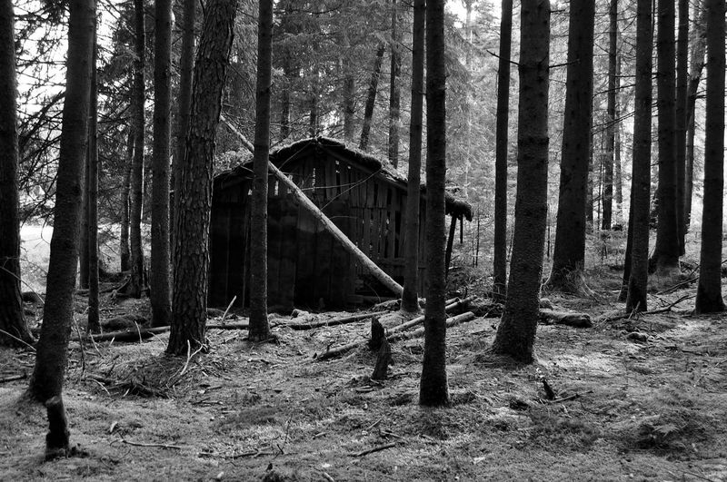 Abandoned Beauty In Nature Damaged Forest Hütte Nature Outdoors Schwarz & Weiß Tree Tree Trunk First Eyeem Photo